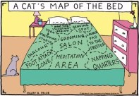 Does your cat use this same map on your bed?