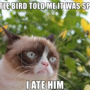 Idioms in use! Grumpy cat, 'gotta' love him...right?