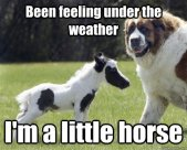 PUN! Ha. Hoarse (scratchy voice from sore throat) VS Horse (animal) Did you at least crack a smile? :)